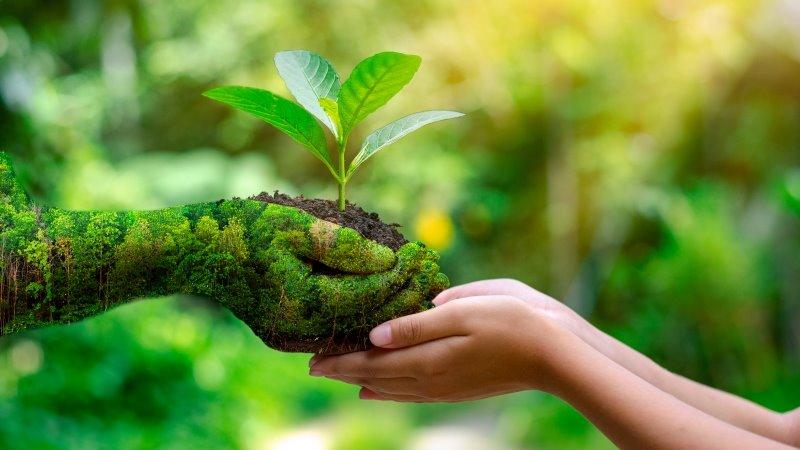 La Carta-de-Belgrado-y-su-importancia-para-el-cuidado-del-medio-ambiente