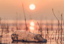 En riesgo 25 por ciento de especies en el mundo por cambio climático